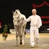 Danish Warmblood National Stallion Horse Show